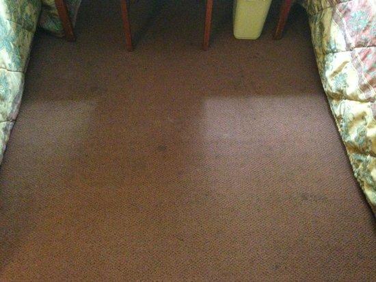 Good Nite Inn near SeaWorld : stained, dirty, damp carpet (it was not raining)