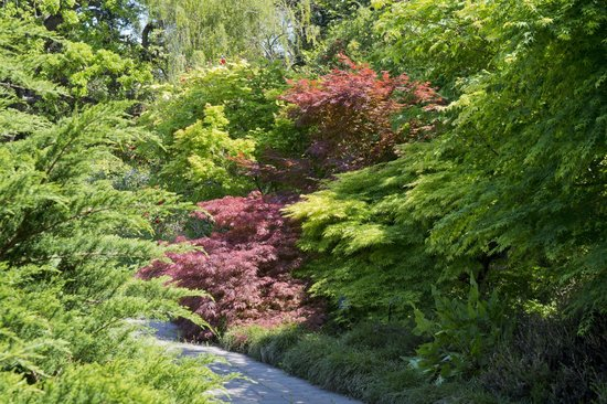 Menlo Park, Californien: Japanese maples