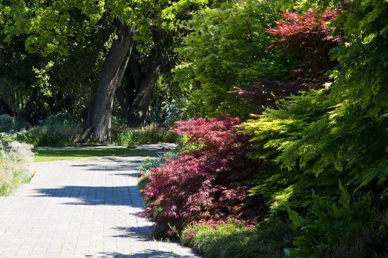 Sunset Magazine Headquarters and Gardens: Japanese Maples and path