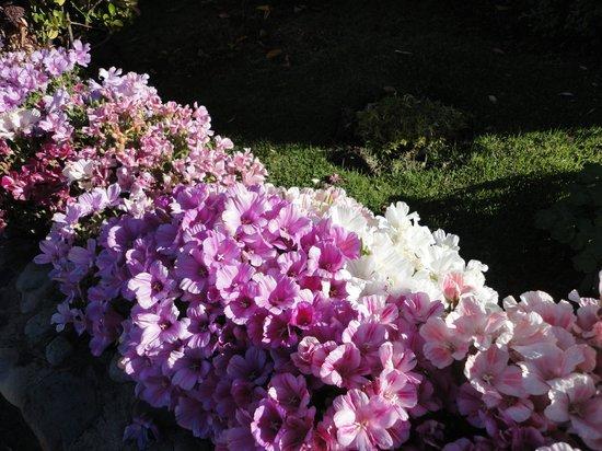Linda Vista Apart Hotel: Flores