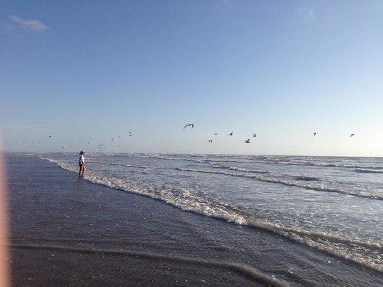 Playas Novillero, เม็กซิโก: Beach Playa Novillero Mexico Nayarit