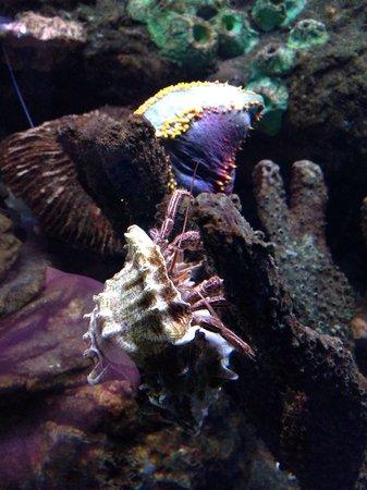 National Sea Life Centre: Hermit crab