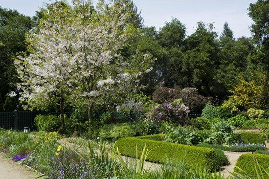 Elizabeth F. Gamble Garden: Cherry