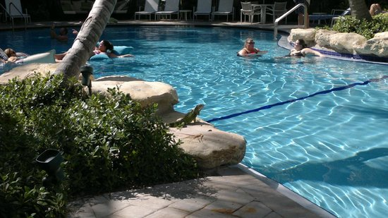 The Inn at Key West : The swimming pool