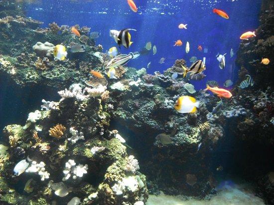 Waikiki Aquarium: The tank with everything that swims.