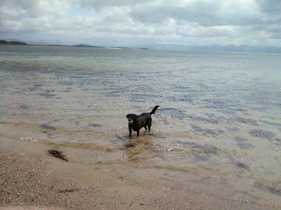 Pwllheli Beach: Our dog paddling in the sea