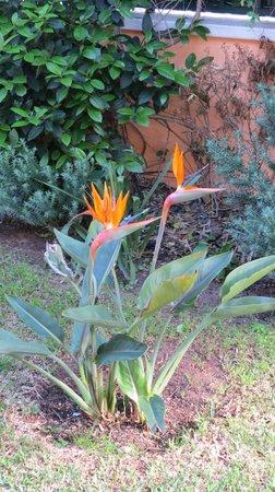 Casa da Luisa: Flowers in Luisas garden