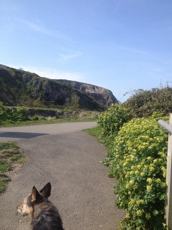 Little Orme: Even the dog loves it