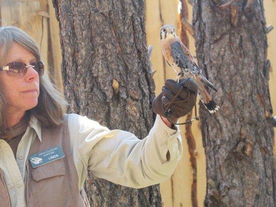 Bearizona Wildlife Park: A Sparrowhawk