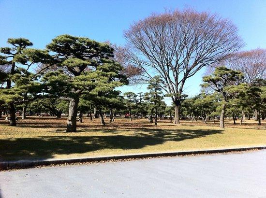 Kokyo Gaien National Garden: 皇居外苑