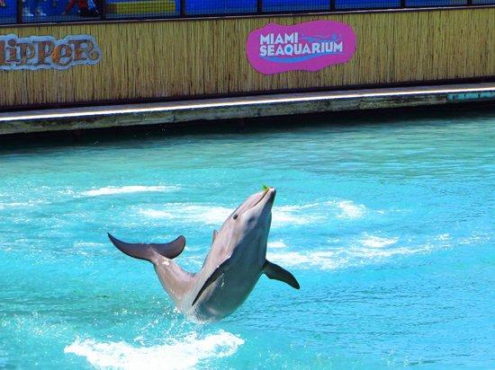 Miami Seaquarium: Dolphin