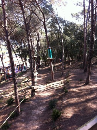 Gnomo Park: I was a monkey in the trees :)