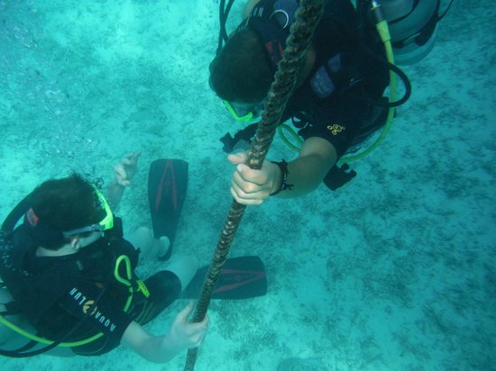 Topdive Moorea: Emerging to 20 feet