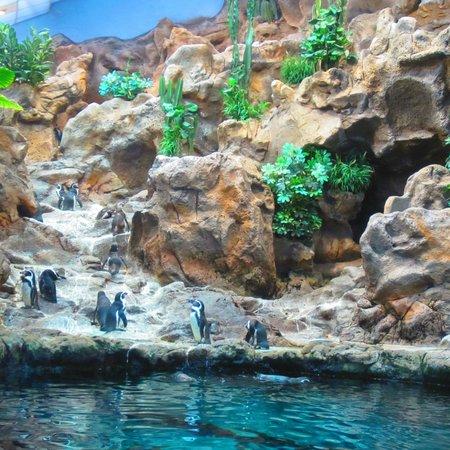 Loro Parque: część z pingwinami