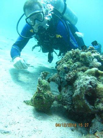 Mermaid Resort : Frog Fish in the grass near Sabang Wrecks