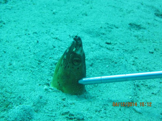 Mermaid Resort: Snake eel