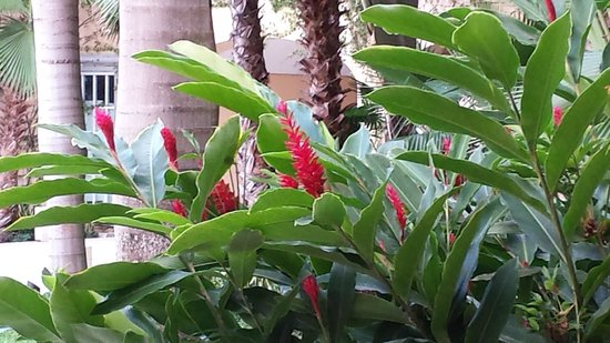 Hacienda Tres Rios : Flowers on the grounds