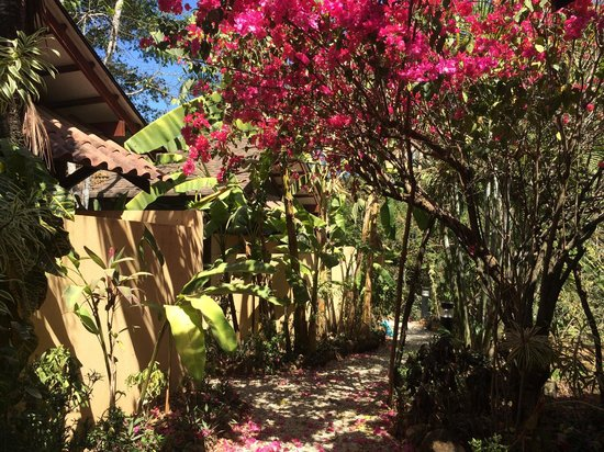Funky Monkey Lodge : Walking to our bungalow