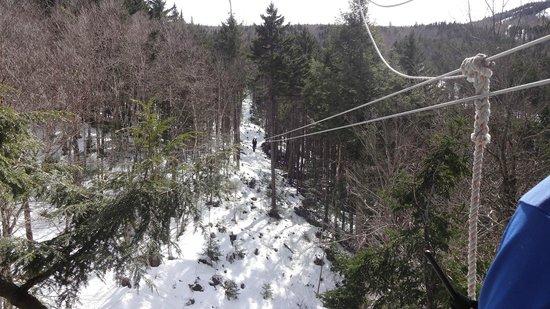 Bretton Woods Canopy Tour: zip5