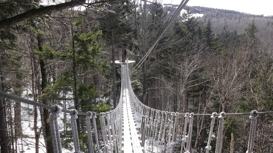 Bretton Woods Canopy Tour: bridge