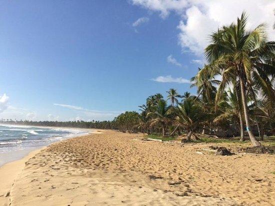 Zoetry Agua Punta Cana : The hotel's beach