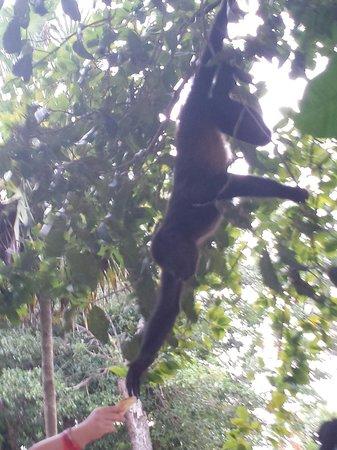 Sandos Playacar Beach Resort : Sandos monkeys :-)