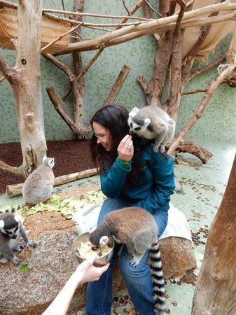 Tierpark Hellabrunn: Feeding the lemurs