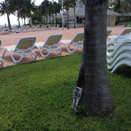 Grand Lucayan, Bahamas: And more electrical hazards...Why would I ever bring my family here again!