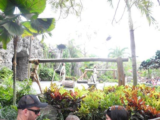 Bali Safari & Marine Park : Animal show