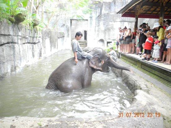 Bali Safari & Marine Park : Elephant Bath