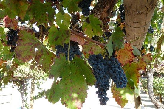 Santa Rita Winery: Gute Erklärung durch den Führer