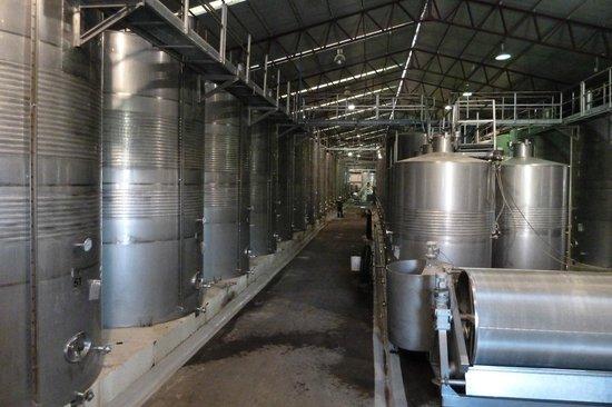 Santa Rita Winery: Gärtanks aus Edelstahl, mit Temperaturregelung