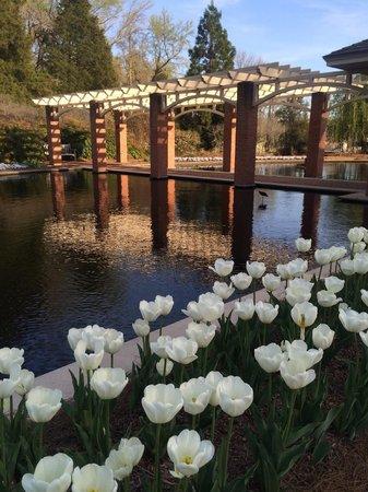 Huntsville Botanical Garden: Water garden