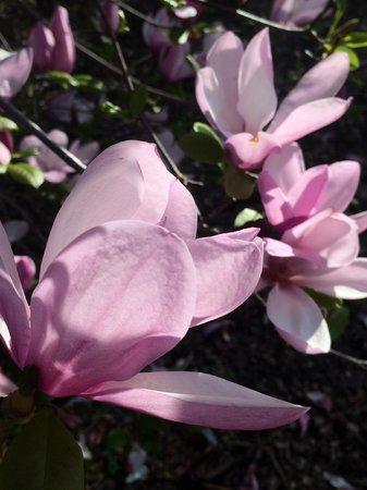 Huntsville Botanical Garden: Flower