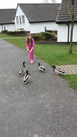 Golden Coast Holiday Village: Ducks come to the doorstep for their dinner sometimes :)