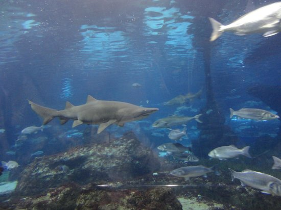 L'Aquarium de Barcelona: Acuario de Barcelona
