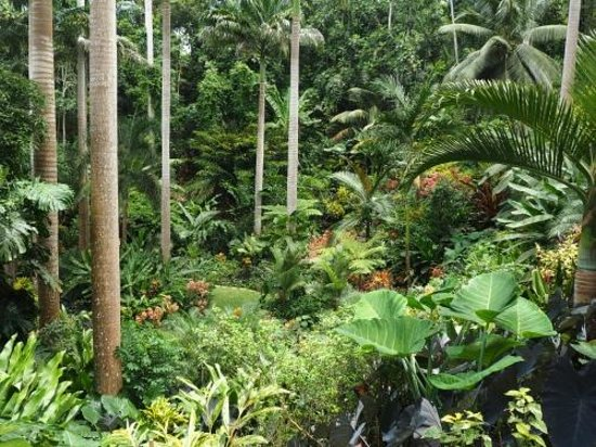 Hunte's Gardens : It does not get more tropical