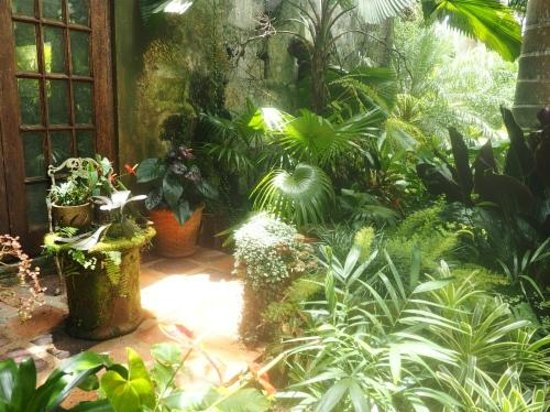 Hunte's Gardens : Great display of potted tropicals