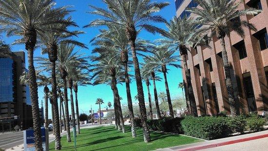 Hilton Phoenix Suites : Beautiful in Feb