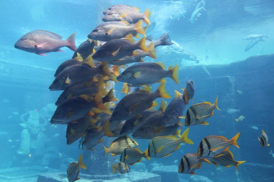 Marine Habitat at Atlantis: stunning fish