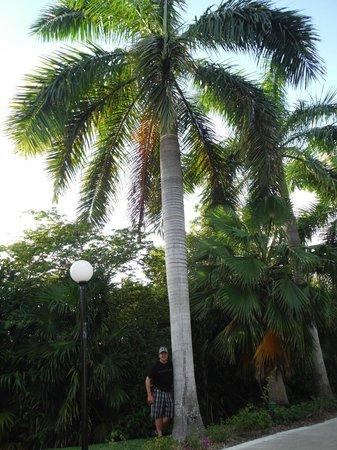 Grand Bahia Principe Coba : Très grands palmiers