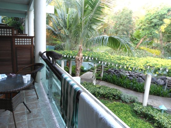 Camayan Beach Resort and Hotel: monkey on veranda