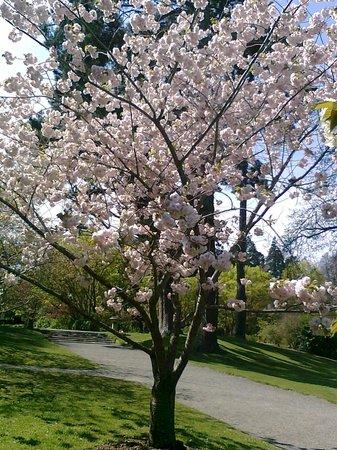 Hagley Park: Stunning