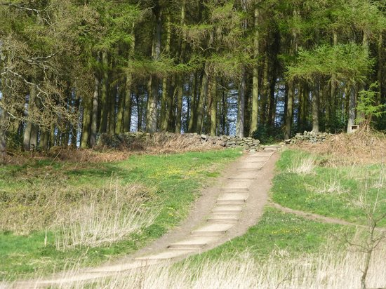 St Ives Estate: Another walk from the carpark into the woods