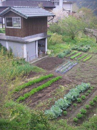 Shimanto Gakusha : 野菜畑
