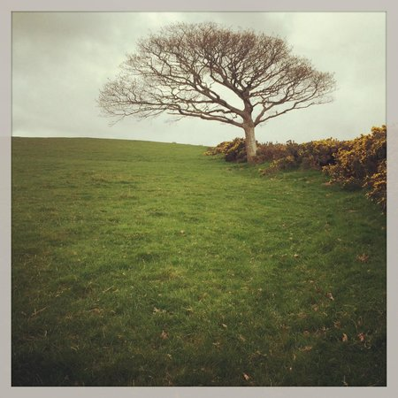 Coolakay House : The lone tree on the hill