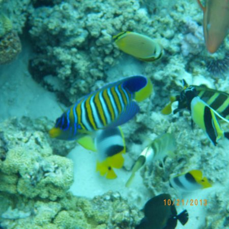 Reef Discovery: fish so colorful and breautiful
