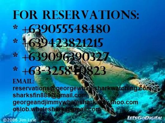 George & Jimmy's Whalewatching Resort: diving reservations