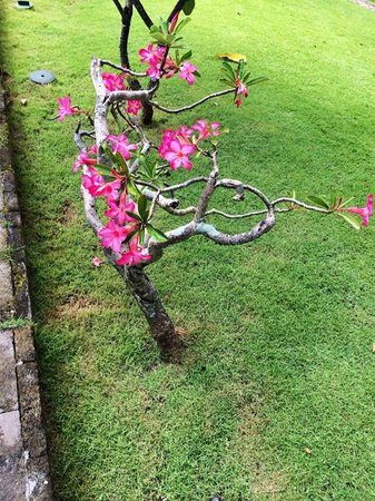 INTERCONTINENTAL Bali Resort : Grounds