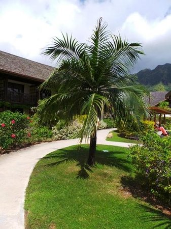 InterContinental Moorea Resort & Spa : palmier